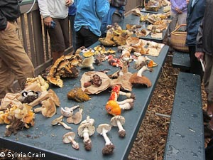 Some of the mushrooms collected on the foray.  Most of these are poisonous.