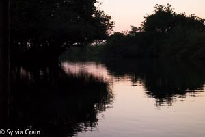 It was peaceful in the mangroves as the sun set.